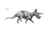 "Triceratops  ""Three-Horned Face "" Massive Late Cretaceous Herbivore"