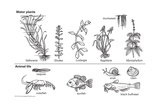 Plant and Animal Life for an Aquarium