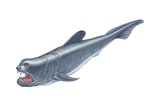 Dinichthys