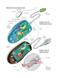 The Bottom Views of a Mechanical and an Optical Mouse  Detailing their Components