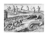 Timucua Indians Killing Alligators