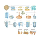 The Brewing Process  Which Turns Barley and Hops into the Alcoholic Beverage of Beer