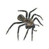 Californian Trap-Door Spider