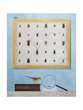Beetle Mania  2012-13