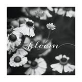 Bloom Reproduction d'art par Laura Marshall
