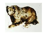 Ours brun Giclée par Sydney Edmunds