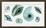 Shell Collection (Teal)