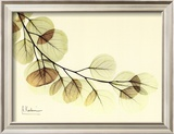 Sage Eucalyptus Leaves II