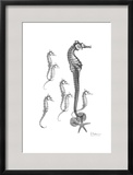 Beach Sea Horse and Sand Dollar