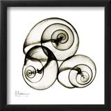 X-ray Snail Shells  Sepia