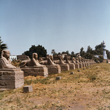 The Avenue of the Sphinx at the Temple of Luxor