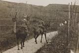 Campagna Di Guerra 1915-1916-1917-1918: Soldiers on Horseback