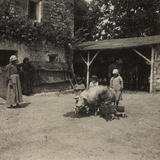 WWI: Inhabitants of Soleschiano with a Sow