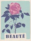 Beaute - Beautiful - Rose