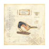 Colro Bird II