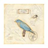 Color Bird III