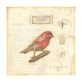 Color Bird I