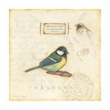 Color Bird IV