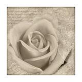 Vintage Rose II