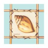 Bamboo Seashell I