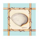 Bamboo Seashell II