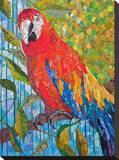 Marvelous Macaw