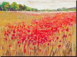 French Poppies