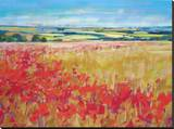 Poppies& Rolling Hills England