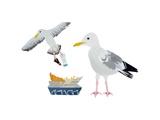 Seagulls  2014