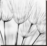 Abstract Dandelion Flower