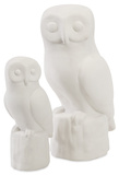 Owl Parliament