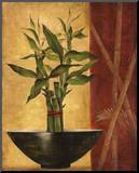 Lucky Bamboo II