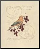 Filigree Songbird