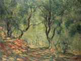Olive Grove in the Moreno Garden  1884