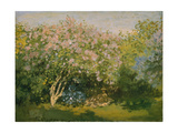 Blooming Lilac in Sunshine  1873