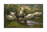 Ducks under Birch Twigs