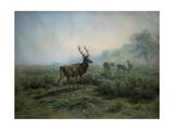 Pack of Deer in Foggy Mountain Landscape  1875