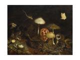 Reptiles  Mushrooms and Butterflies