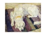 Reclining Dog (Portrait of a Dog)  1909
