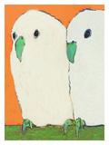 Parakeets No Text