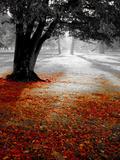 Autumn Leafs Papier Photo