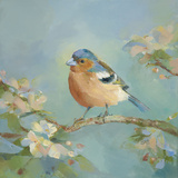 Woodland Birds II
