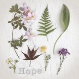 Nature Hope