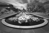Brooklyn Botanic Gardens Lily Ponds - Infrared Garden Landscape