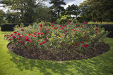 Rose Bed Kew Gaardens (English Garden Scene)