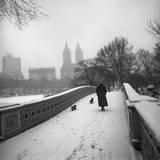 Bow Bridge Dogs  Central Park