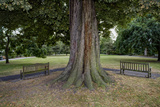 Tree and Two Benches  St Peter's Square  Hammersmith  London (Urban Park  Horse Chestnut)