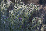 Sun Lit Wild Flowers with Centers  Redwood Regional Park