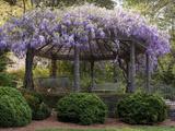 Wisteria Arbor  Duke Gardens  Durham  NC (Purple Spring Flowers)