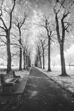 Brooklyn Botanic Gardens - Infrared Garden Walkway